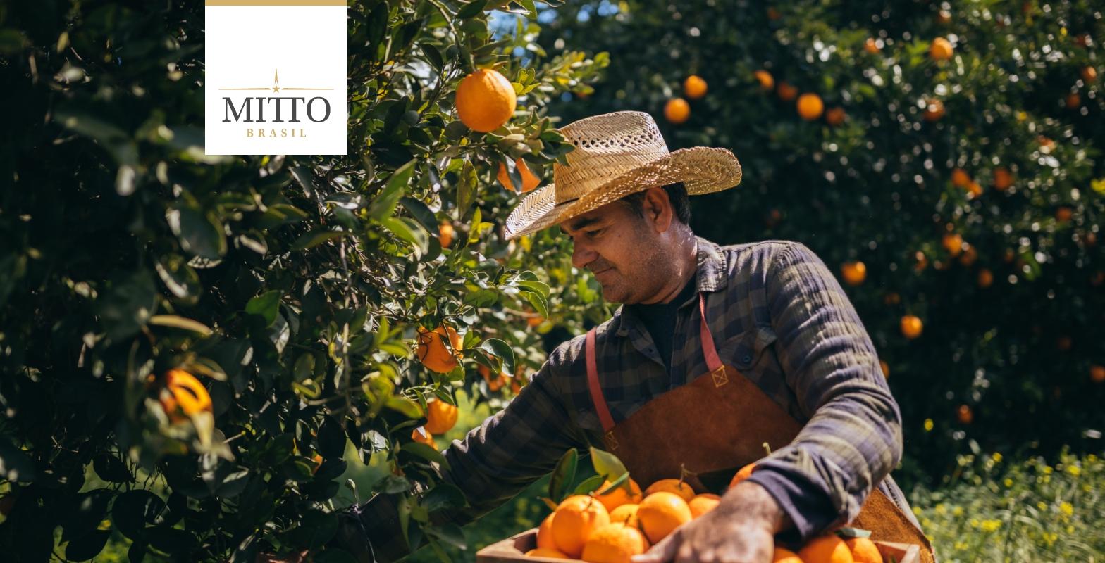 Mitto - Identidade visual e Branding (1)